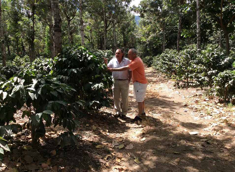 Guatemalan-Coffee-Plantation.jpg